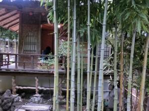 床下の曲線の節の竹が亀甲竹です